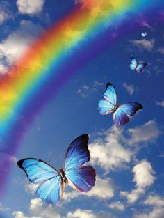 Rainbow with butterflies Under The Rainbow, Rainbow Sky, Rainbow Butterfly, Butterfly Effect, Blue Butterfly, Rainbow Colors, Indigo Children, Somewhere Over, Rainbow Wallpaper