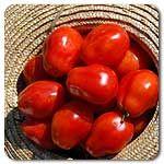 Organic Roma VF Tomato
