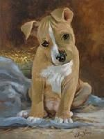 1000 Images About American Staffordshire Terriers On