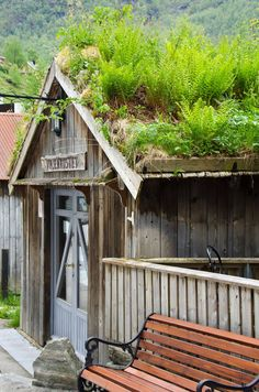 """Maybe nature didn't """"win"""" this one...looks like a case of """"If you can't beat them, join them"""" and the roof is purposely plant friendly? (Geiranger, Norway)"""