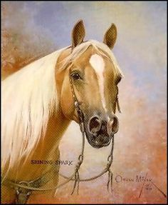 Shining Spark. Palomino horse western with bridle