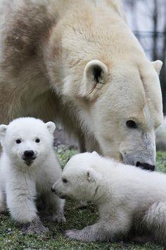 IJsberennieuws - Dierenrijk, Lekker beesten tussen de dieren!