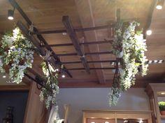 wisteria ladders 2
