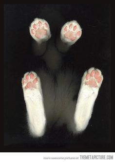Kitty paws…