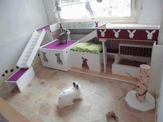 My bunny would be in heaven if I had this!!