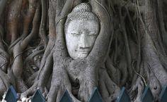 Rosto de Buda esculpida no tronco de uma árvore em um templo na Tailândia.