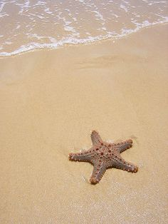 put me on a beach. i will be as happy as a clam, er starfish Florida Images, Sand Sculptures, Shell Beach, Dont Call Me, Sand And Water, Sea World, Beach Pictures, Summer Of Love, Ciel