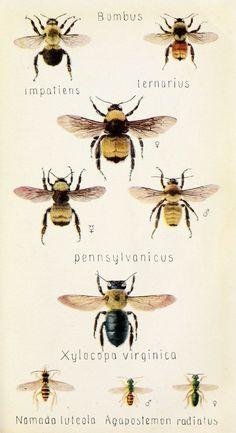 vintage bees. More