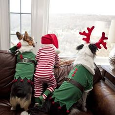 11 Adorable Kids and Their Dogs Dressed Up Together for Christmas