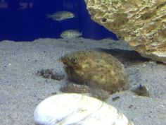 spider crab Barnegat Bay, Spider, Animals, Spiders, Animales, Animaux, Animal, Animais