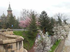 Timisoara,aprlie 2018 Sidewalk, Plants, Side Walkway, Walkway, Plant, Walkways, Planets, Pavement