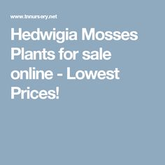 Hedwigia Mosses Plants for sale online - Lowest Prices!