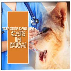 Clinic, Dubai, Kitty, Pets, Little Kitty, Kitty Cats, Kitten, Cats, Animals And Pets