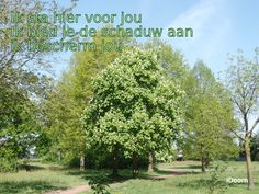 schaduw.jpg (1600×1200)