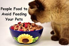 People Food to Avoid Feeding Your Pets. #pet #food #cat #dog #health Hydrogen Peroxide Uses, Baked Carrots, Dry Well, Eat Fruit, Foods To Avoid, Vitamin D, Losing A Pet, Summer Fruit, Dog Food Recipes