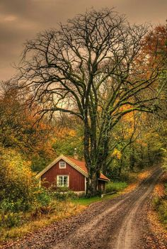 country road take me home. Cenas Do Interior, Beautiful World, Beautiful Places, Country Life, Country Roads, Country Living, Country Charm, Rustic Charm, Country Scenes