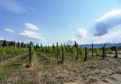 Central Otago is probably the cleanist place on earth in which to make wine.