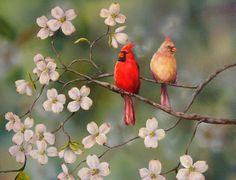 PRINT Cardinal Red Bird Dogwood Flowers Davis by ArtbySarahDavis