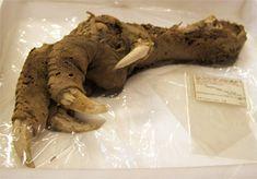 Las 7 descubrimientos arqueológicos más terroríficos | Cracked.com