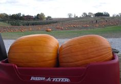 Albion Orchards has public apple picking, and welcomes school trips. Buy farm fresh produce in our country store, pumpkin patch and Christmas tree farm. Christmas Tree Farm, Orchards, Pumpkins, Fresh, Vegetables, Food, Essen, Vegetable Recipes, Meals