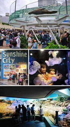 Fish Stories: 7 More Amazing Public Aquariums - WebEcoist = International Aquarium, Ikebukuro, Tokyo