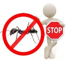 Disinfestazione formiche in tutti i tipi di ambienti, in maniera sicura e definitiva. http://www.bioecologysrl.it/formiche/disinfestazione_formiche.html