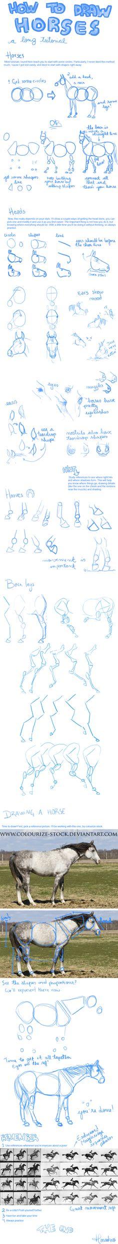 Drawing Horses by Horodno.deviantart.com on @deviantART