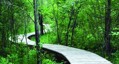 If I had enough property and enough time and patience I would build walkways like this through my woods :)