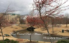 Did you know that Frisco Texas has our very own Central Park? It's not only in Manhattan, New York City. Frisco Texas's Central Park is located off Park. Lubbock Texas, Frisco Texas, Living In Dallas, Winter Scenery, Home On The Range, Reasons To Live, Texas Travel, Central Park, Places To Go