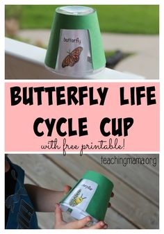 Butterfly Life Cycle Cup -- Learn about the life of a butterfly as you rotate the cup to see the 5 stages! by dana Kindergarten Science, Teaching Science, Science Activities, Science Ideas, Sequencing Activities, Primary Science, Teaching Skills, Speech Activities, Creative Teaching