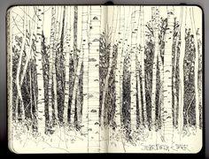 Ian Sidaway Fine Line: Silver Birch