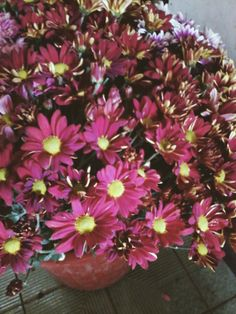 Red Daisy Mum. What a beautiful sarcasm for those red.