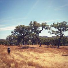 Enjoying a stroll through the native and magnificent cork oaks #familytravel #outdoorsandfree