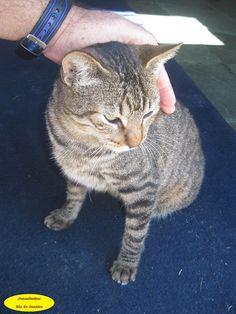 Parda Essa gatinha mora em uma capela na estrada entre Japeri e Miguel Pereira-RJ