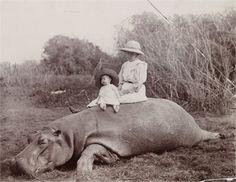 The Colonist & the Hippo Old Family Photos, Hippopotamus, Ancestry, Animals, Animales, Animaux, Animal, Animais