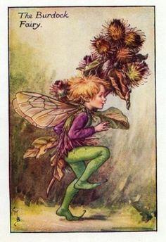 Burdock Flower Fairy » Flower Fairy Prints- Vintage Fairy Prints by Cicely Mary Barker for sale