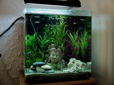 Posted by shil on avforums. Aqua One AquaNano 60l cube tank 4 Rumney Nose Tetra 3 Zebra Danio 4 Neon Tetra 2 Guppys 1 Betta Fighter  1 Common brown Pleco