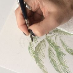 Drawing a palm tree with watercolours. Materials used are Daniel Smith Aquarell colours and canson watercolour paper. Watercolor Video, Watercolour Painting, Watercolours, How To Dry Basil, Herbs, Photo And Video, Palm, Drawings, Illustration