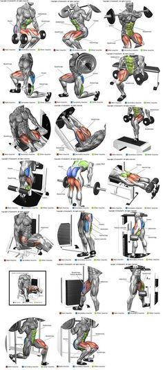 Perna ( quadríceps, bíceps femural, adutor e abdutor) (Fitness Workouts Abs) #musclebuilding