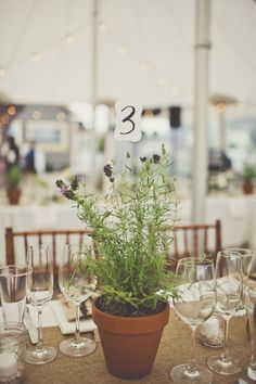 planted pot table numbers http://www.hotchocolates.co.uk http://www.blog.hotchocolates.co.uk