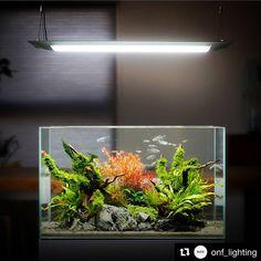 Betta Aquarium, Tropical Fish Aquarium, Tropical Fish Tanks, Nano Aquarium, Diy Aquarium, Nature Aquarium, Freshwater Aquarium Fish, Aquarium Design, Planted Aquarium