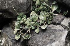 Plantes magnifiques