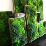 Forests within a frame portals to the natural world A welcome break from straight lines and hard surfaces We create another way to get your leafy greens Where would you put an Artisan Moss Plant Painting choose pickyourplace locationlocationlocation portal naturalworld artisanmoss  plantpaintings simplicity inspiration bringtheoutsidein livingwalls greenwall customdesign art moss green wallart reclaimedwood greendesign maintenancefree preservedplants interiordesign interiors interiorstyling…