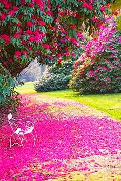 Garden of Tregothnan, south of Truro, Cornwall, UK