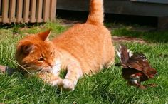 5 Easy Ways to Save Birds (and Cats)  http://www.care2.com/causes/5-easy-ways-to-save-birds-and-cats.html