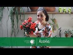 Dicas de Cultivo de Azaléias/Azaleas Care Tips - A Menina do Dedo Verde - YouTube