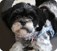 105 Best Adorable Dogs For Adoption Images On Pinterest Adoption