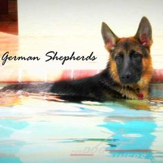 Enjoying the pool. Don't miss our next #dog #photo #contest