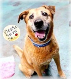 3/13/17 LISTED TO BE MURDERED TODAY!! Brooklyn Center My name is MANUTE. My Animal ID # is A1079657. I am a neutered male gold germ shepherd mix. The shelter thinks I am about 13 YEARS old. I came in the shelter as a OWNER SUR on 02/27/2017 from NY 11226, owner surrender reason stated was BITEPEOPLE. http://nycdogs.urgentpodr.org/sunny-a1079657/