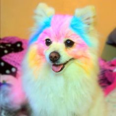 if I owned this kind of pup....I would be soooo tempted!!!!!